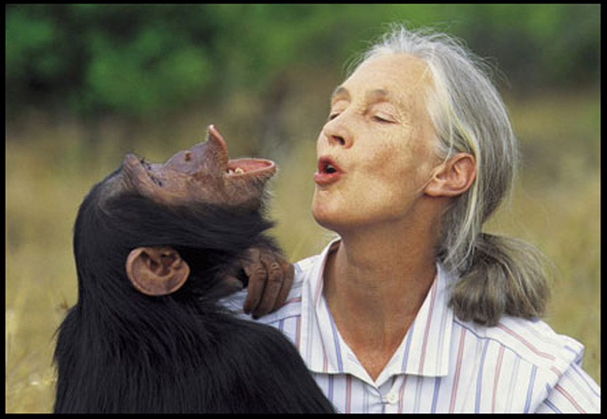 Jane and chimp for facebook copy